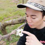 梨の摘蕾(てきらい)花芽落とし解説