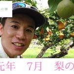 梨の栽培、成長過程の様子【7月9日】