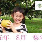 梨の成長過程、栽培の様子【R元年8月9日現在】