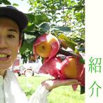 梨の種類【あきづき】紹介