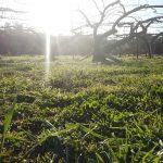 畑から見る朝日(2020/3/24)